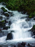 Wahkeena Falls I. N the Columbia River Gorge, OR Royalty Free Stock Photos