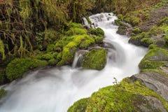 Wahkeena-Nebenfluss im Frühjahr Stockbilder