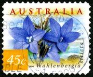 Wahlenbergia-Blumen-australische Briefmarke Lizenzfreie Stockfotografie