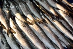 Wahoo fish on display for sale Royalty Free Stock Photography