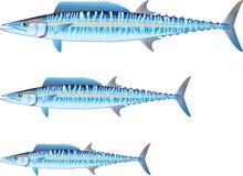 Wahoo game fish Vector illustration Royalty Free Stock Photography