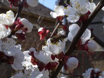 Wahrer Frühling Stockbilder