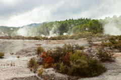 Wai-O-Tapu. Stock Photos