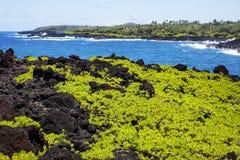 Waianapanapa国家公园,毛伊夏威夷 免版税库存照片