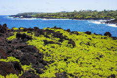 Waianapanapa stanu park, Maui Hawaje Zdjęcie Royalty Free