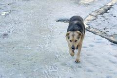 Waif hond die op straat in stadspark lopen Probleem van verlaten dieren en overladen schuilplaatsen royalty-vrije stock foto