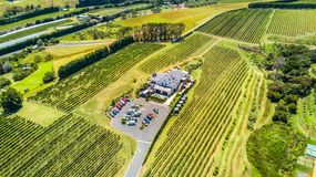 Aerial view on a small vineyard with green hills on the background. Waiheke Island, Auckland, New Zealand. Stock Image