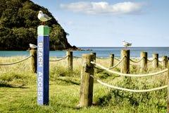 Waihi strandCoromandel halvö Nya Zeeland NZ Royaltyfria Foton