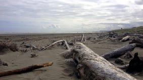 Waikanae plaża, Nowa Zelandia Obrazy Stock