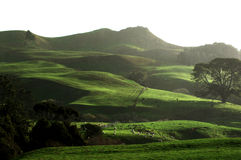 Waikato landscape NZ. Rolling hills sheep and beef farming country in the Waikato west area of Glen Massey Stock Photography