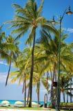 waikiki пляжа Стоковые Фото