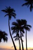 Waikiki Beach at night (Honolulu, Oahu, Hawaii) Royalty Free Stock Photography