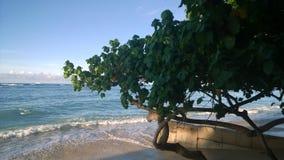 Waikiki, Hawaii imagen de archivo