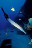 waikiki marino della scogliera di vita artificiale Fotografie Stock Libere da Diritti