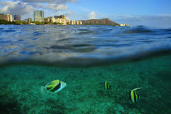 Waikiki, Oahu, Hawai Fotografia Stock Libera da Diritti