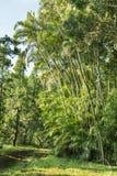 Waikomoi Hiking Trail on Maui Royalty Free Stock Photos