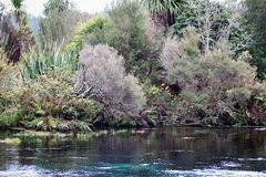 Waikoropupu春天,新西兰 免版税库存照片