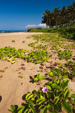 Wailea beach  Royalty Free Stock Photography