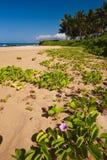 Wailea beach  Royalty Free Stock Photography