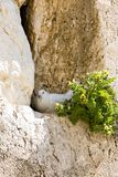Wailing Wall royalty free stock images