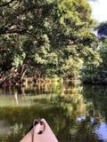 Wailua flod på ön av Kaui Fotografering för Bildbyråer