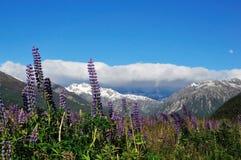 Waimakariri dolina w lecie Zdjęcie Stock