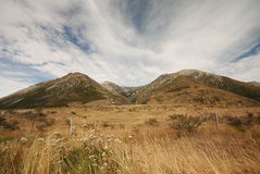 Waimakariri valley Royalty Free Stock Photography