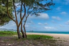 Waimanalo Beach and an island on Oahu, Hawaii as seen through the ironwood trees stock photo