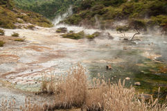 Waimangu volcanic valley Stock Images