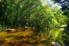 Waimea谷的美丽的河在瓦胡岛 免版税库存照片