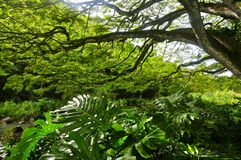 Waimea Arboretum and Botanical Garden Royalty Free Stock Photography