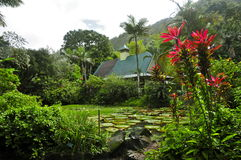 Waimea Arboretum and Botanical Garden, Oahu Stock Photos