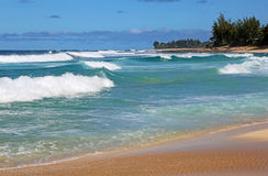 Waimea Bay Stock Image