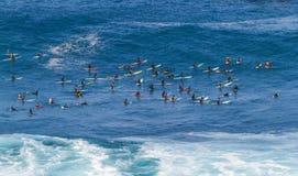 Waimea bay Oahu Hawaii, A group of surfers wait for a wave to surf Royalty Free Stock Photos
