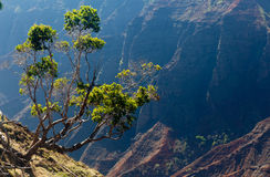 Waimea Canyon on Kauai Royalty Free Stock Image