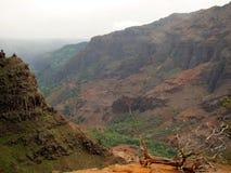 Waimea Schluchtlandschaft mit totem Baum, Hawaii lizenzfreie stockfotos