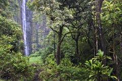 Waimoku下跌, Pipiwai足迹, Kipahulu国家公园,毛伊,夏威夷 库存图片