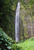 Waimoku Falls (Maui, Hawaii). Panoramic view of the Waimoku Falls at the end of Pipiwai Trail (Maui, Hawaii royalty free stock images