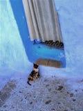 Wainting-Katze Lizenzfreie Stockfotos