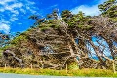 Waipapa punkt; Południowa wyspa obraz stock