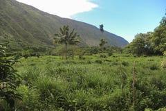 Waipio谷和它豪华的植被,大岛,夏威夷 免版税图库摄影