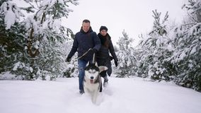 Waist up portrait of happy modern couple playing with cute Husky puppy outdoors in winter, focus on Asian man smiling at