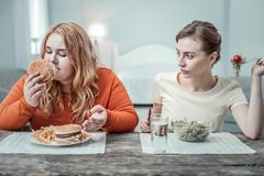 Enigmatical overweight female person smelling tasty burger stock photos