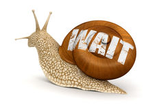 Wait Snail (clipping path included) Royalty Free Stock Photos