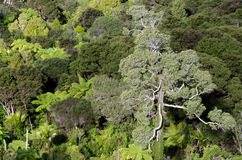 Waitakere Ranges - New Zealand Royalty Free Stock Photography