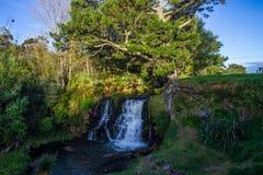 Waitangi Falls. Near to Auckland city, at east coast Stock Photo