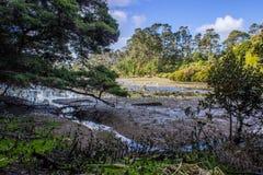 Waitangi Falls. Near to Auckland city, at east coast Stock Photography