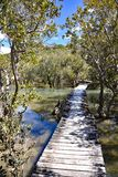 Waitangi river boardwalk, New Zealand. This boardwalk crosses the Waitangi river, then a mangrove swamp before the track reaches the Haruru Falls from the stock photos