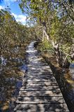 Waitangi river boardwalk, New Zealand. This boardwalk crosses the Waitangi river, then a mangrove swamp before the track reaches the Haruru Falls from the royalty free stock photography