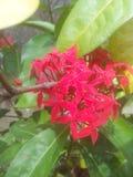 Waite kwiat Obraz Stock